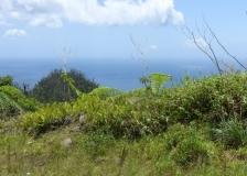 20180521 Dominica New World (24)